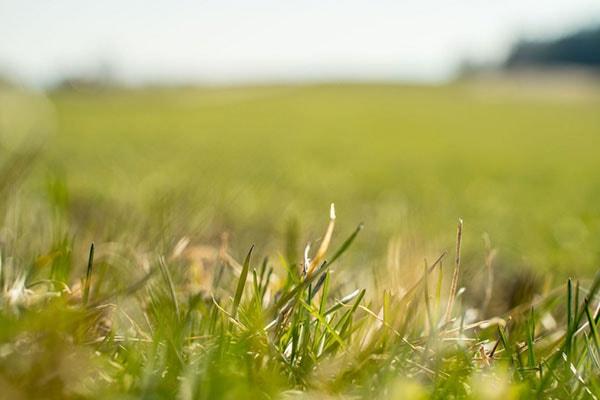 JOSILAC grass