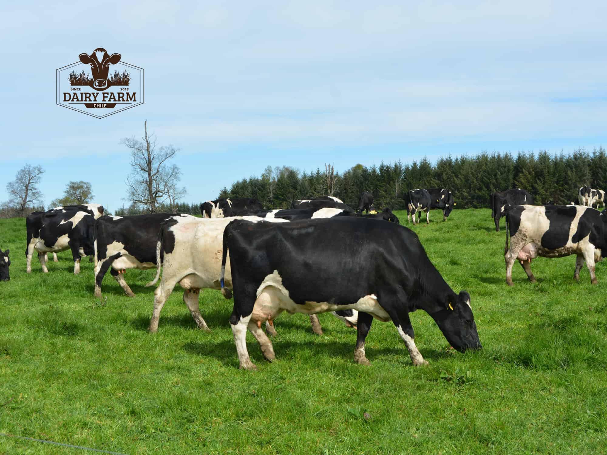 JOSERA DairySafe -  lucha contra casos de metritis en el postparto