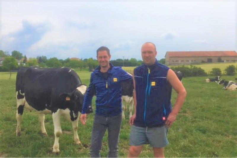 JOSERA DairyPilot – mejorar la calidad de la leche durante las fases de transición